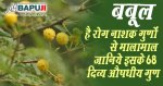 बबूल है रोग नाशक गुणों से मालामाल जानिये इसके 68 दिव्य औषधीय गुण | Babul Detail Information and Medicinal Uses in Hindi