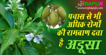 adusa plant benefits in hindi
