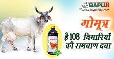 गोमूत्र है 108 बिमारियों की रामबाण दवा | Benefits Of Cow Urine(Gomutra Ark)