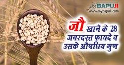 जौ खाने के 28 जबरदस्त फायदे व उसके औषधिय गुण | Benefits of Barley (jau) in Hindi