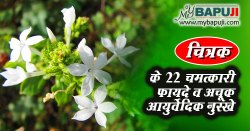 चित्रक के फायदे और नुकसान गुण व उपयोग | Chitrak Benefits and Side Effects in Hindi