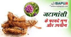 जटामांसी के फायदे गुण उपयोग और नुकसान | Jatamans ke Fayde aur Nuksan in Hindi