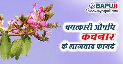 कचनार के फायदे ,औषधीय गुण और उपयोग | Kachnar Ke Fayde Aur Upyog Hindi Mein