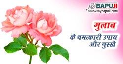 गुलाब के चमत्कारी उपाय और नुस्खे