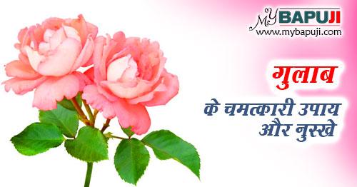 gulab ke gharelu nuskhe aur upay hindi mein