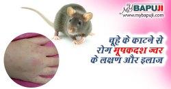 चूहे के काटने से रोग मूषकदश ज्वर के लक्षण और इलाज