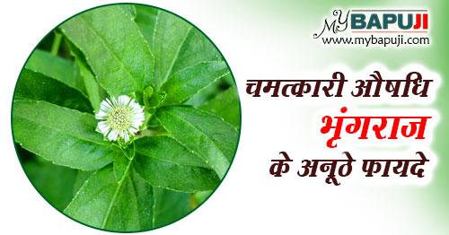 Bhringraj ke fayde aur nuksan in hindi