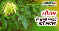 शीशम के फायदे ,औषधीय गुण और उपयोग | Sheesham Benefits In Hindi