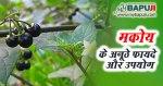 मकोय के अनूठे फायदे ,औषधीय गुण और उपयोग | Makoy Benefits In Hindi