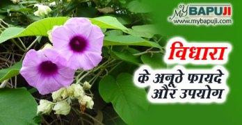 vidhara ke fayde gun upyog aur nuksan in hindi