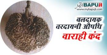 varahi kand ke fayde aur nuksan in hindi
