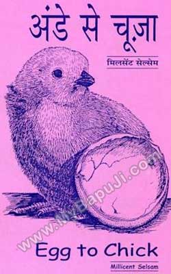 अंडे से चूजा | FROM EGG TO CHICK