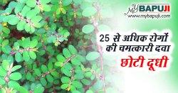 Choti Dudhi ke Fayde | छोटी दूधी के फायदे ,गुण ,उपयोग और नुकसान