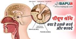 पीयूष ग्रंथि क्या है इसके कार्य और फायदे - Pituitary Gland in Hindi