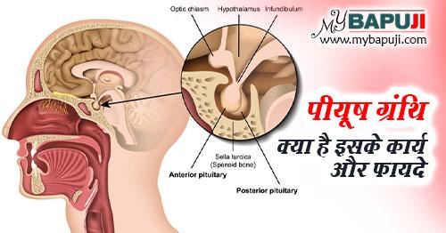 piyush granthi kya hai hormones aur karya in hindi