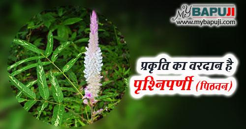 Prishniparni ke Fayde Gun Upyog aur Nuksan in Hindi