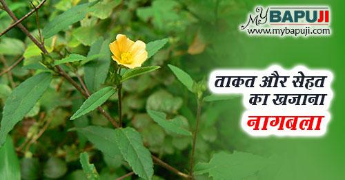 naagbala ke aushadhi gun upyog fayde aur nuksan in hindi