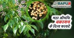 महा औषधि बकायन (महानिम्ब) के दिव्य फायदे - Bakayan ke Fayde aur Nuksan in Hindi