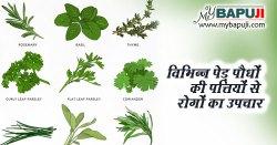 विभिन्न पेड़ पौधों की पत्तियों से रोगों का उपचार
