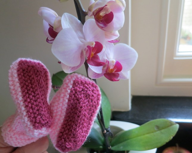Sally-Boots and orchid