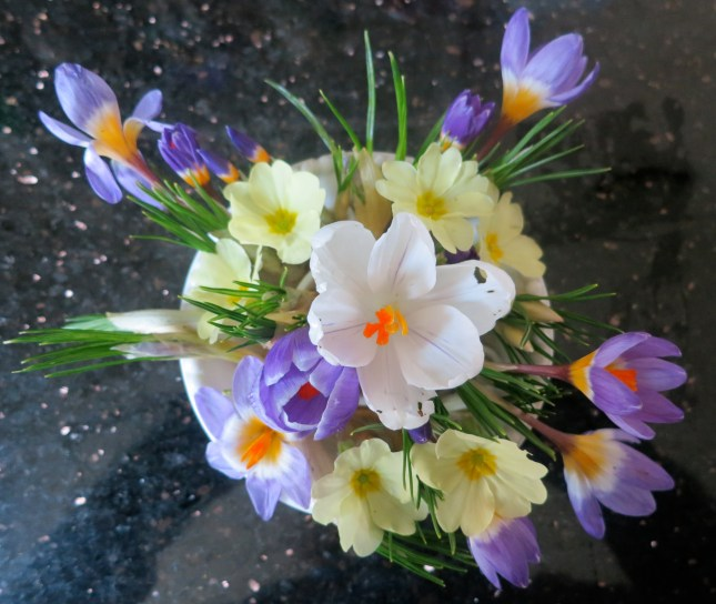 Posy for the table, using rescued Crocuses and Primroses
