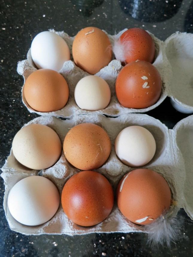 Today's beautiful organic and free range eggs