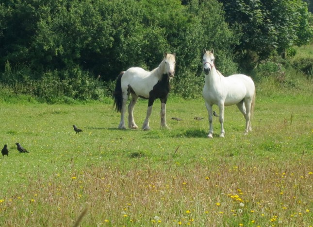 Two new horses