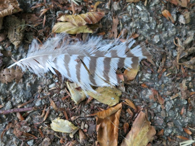 Whose feather is this?
