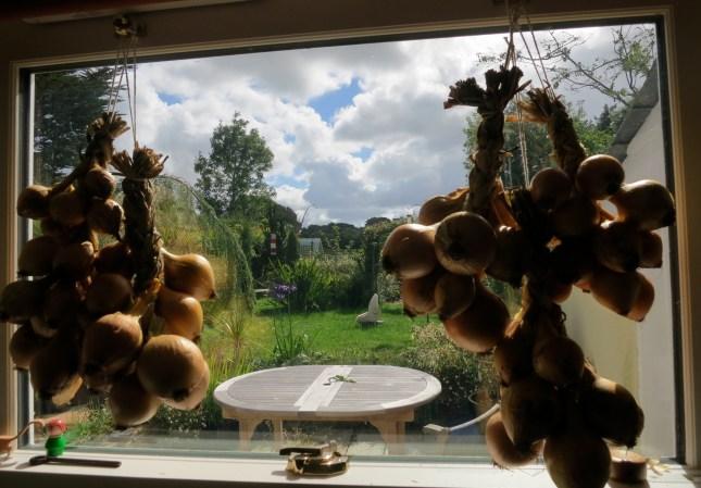 18lbs of onions