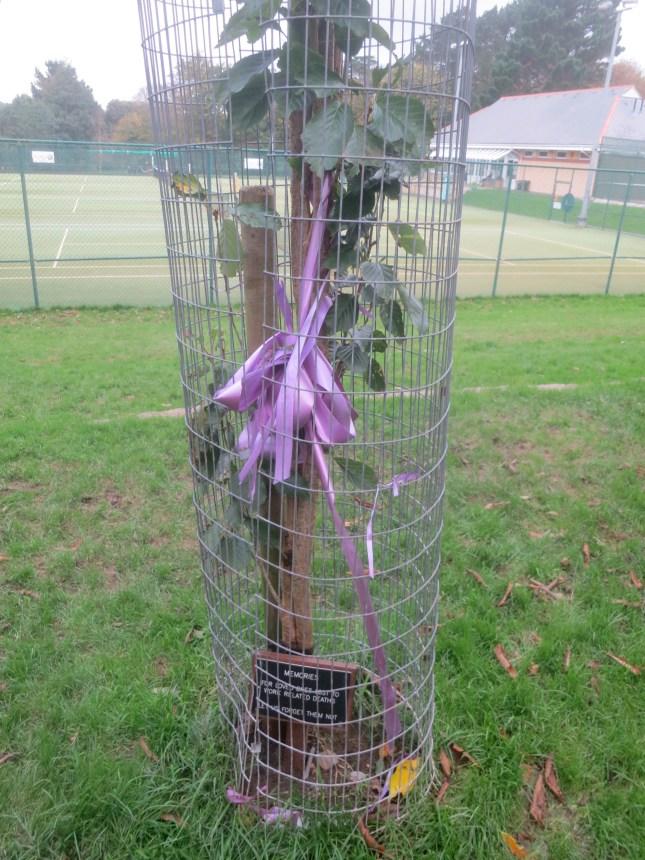 Be-ribboned tree