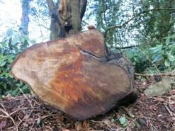 Cut trunk with pebble