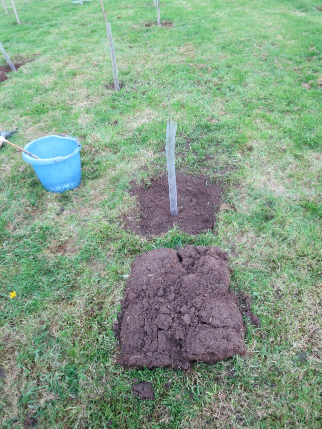 Our first tree planted