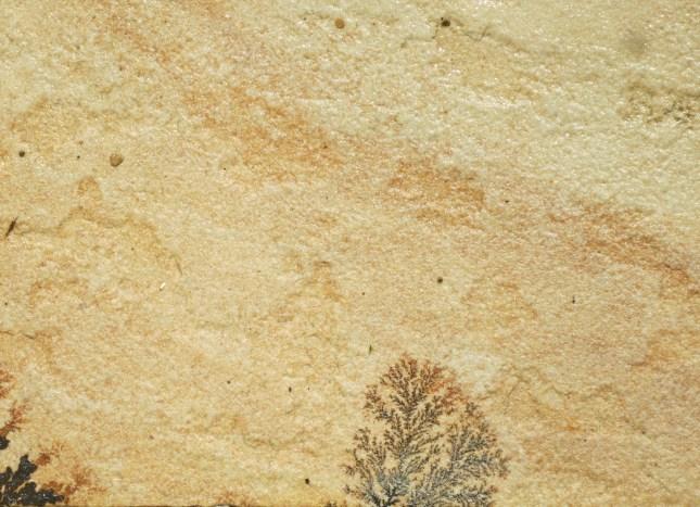 Feathery markings