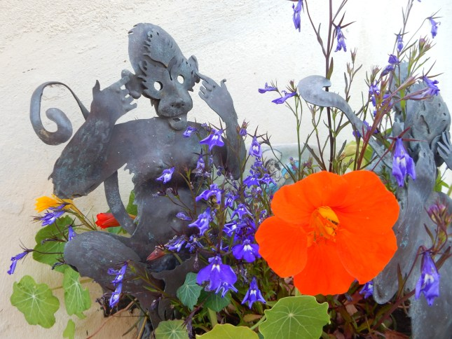 Monkey planter with Nasturtiums and Lobelia