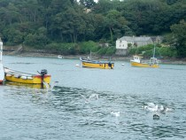 Fisherman and gulls in The Helford River