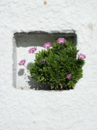 Plants growing in the wall