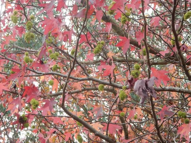 Pinky leaves