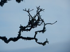 Winter branches with lichen and buds