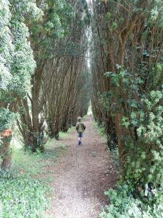 The avenue of yew trees