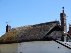 One of the gorgeous thatched roofs, this one with an owl
