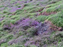 The Heather is wonderful