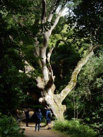 Enormous tree