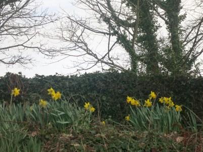 Hedgerow near Carnon Downs