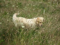 Kaia in the long grass