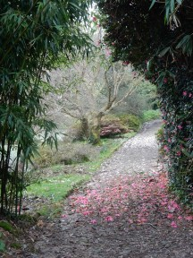 Petals on the path