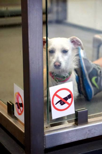 Adopt a dog LA Love and Leashes