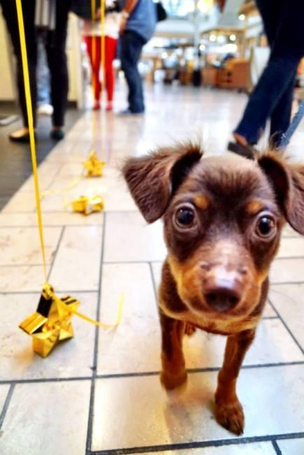 LA Love & Leashes dog adoption