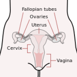 Vagina facts: 10 things you need to know about your most intimate parts