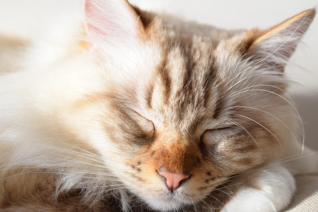 Le Défi du Lundi – 5 bonnes raisons d'être un chat     #DDLMBQ