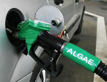 Algas como fonte de Green-Bio-Combustíveis